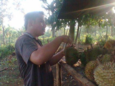 Wisata Kebun Durian